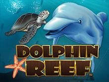Dolphin Reef - игра онлайн в виртуальном игровом клубе